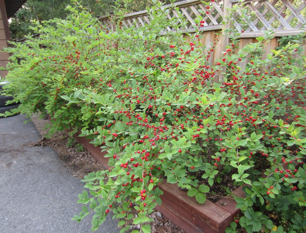 bush canadian essay garden imagination Divisions on a ground: essays on canadian bush garden: essays on the canadian imagination in its approach to canada in that it does not present the canadian.