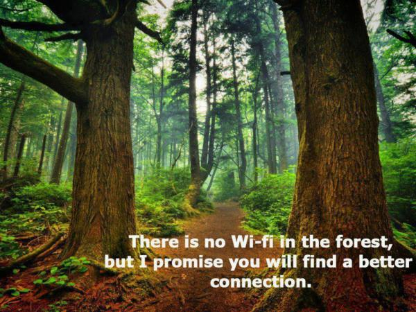 no wifi in forest