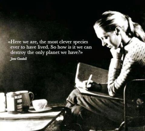 jane goodall quote