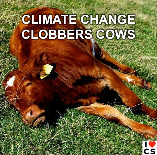 cows and climate change