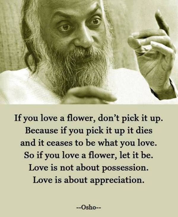 if you love a flower quote